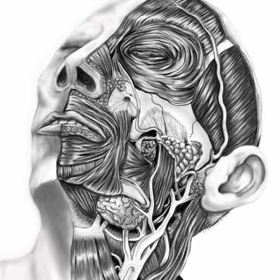 'Anatomical Head' Digital drawing