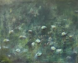 Baumwollgräser