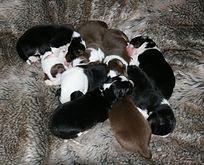 Newborn Puppies Greg Paris.jpg