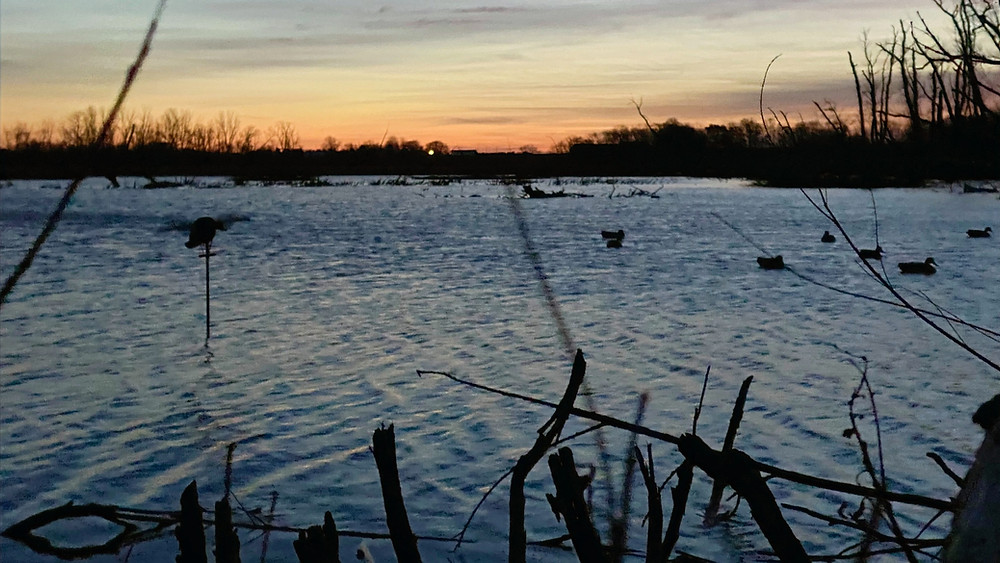 Mojo duck decoy, duck decoys and sunrise during duck hunt