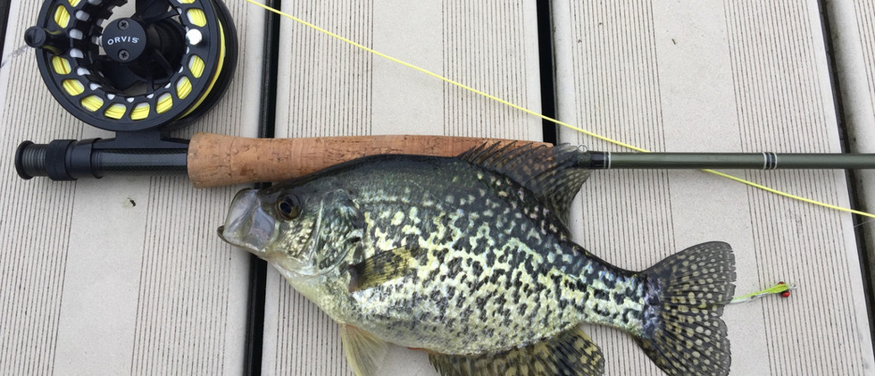Crappie on the Fly.jpg