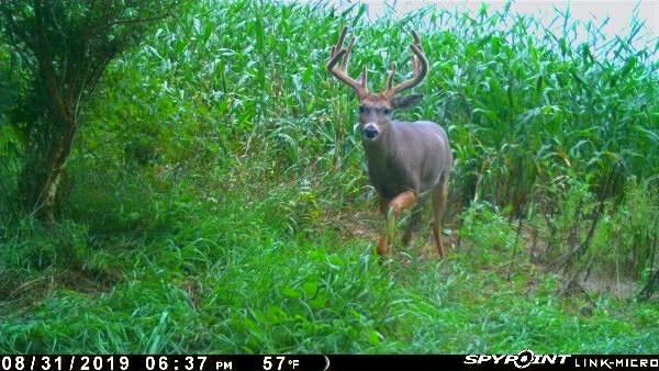 Learning to Hunt Trail Cameras