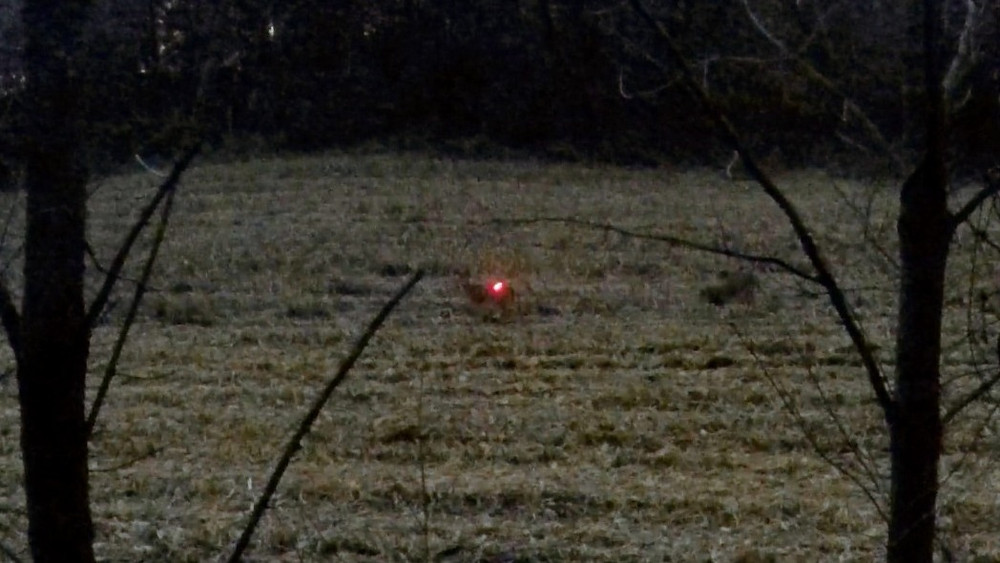 arrow with lighted nock hitting whitetail doe in cornfield