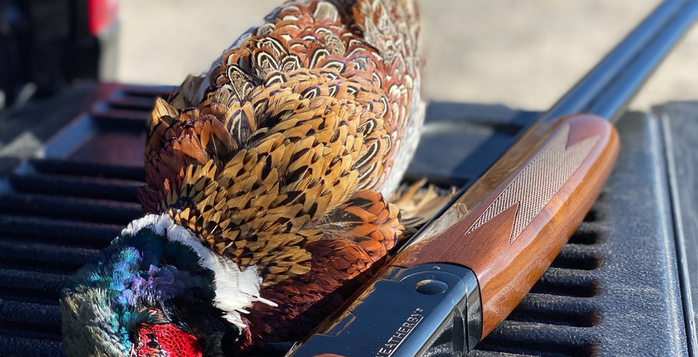 Pheasant Hunting with Weatherby Over Under
