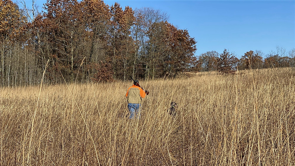 hunter with shotgun hunting with dog in CRP field for pheasant
