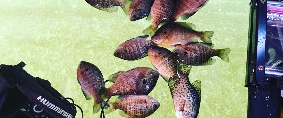 Ice Fishing for Panfish
