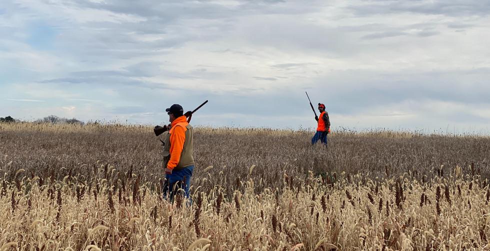 Walking the Pheasant Fields