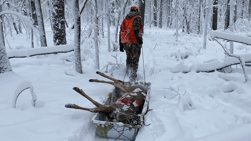 6 piont ohio buck dragging through snow with hunter