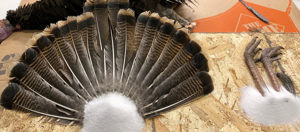 DIY Turkey Mount