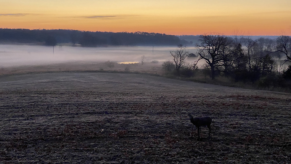 buck decoy sunrise