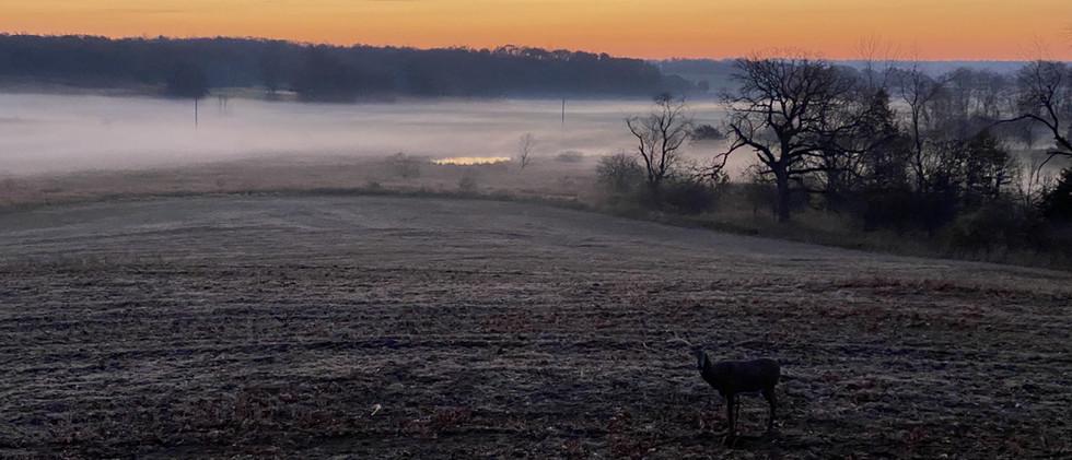 Buck Decoy at Sunrise