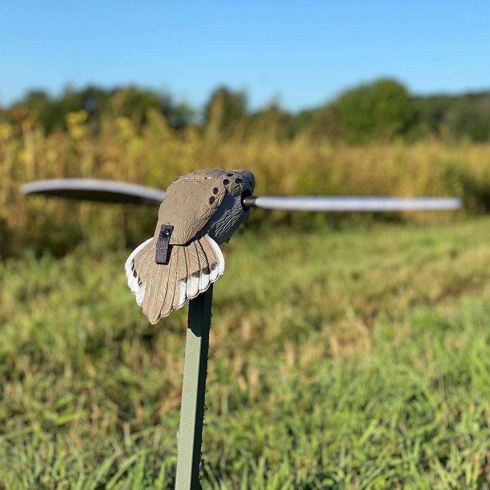 Mojo Dove Decoy in Sunflower field