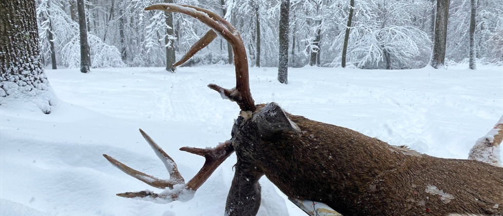 Whitetail Deer.jpg
