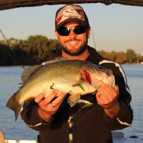 How to Catch Big Bass on Muskie Baits
