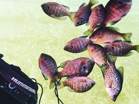 How to Ice Fish for Bluegill