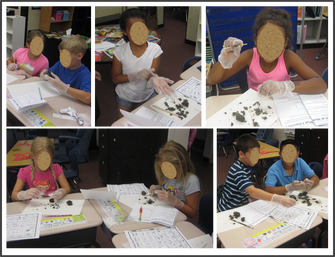 Science Investigation: Owl Pellets