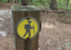 Image of a trail marker with a backpacker on a yellow background. Shows how Wise Insights uses leadership and executive coaching to help  business leaders find their way through growth challenges.