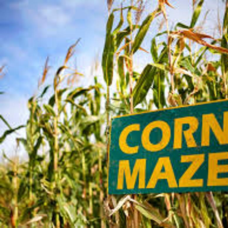 Teen Corn Maze
