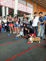 Pets Fair and Culinary Bazaar