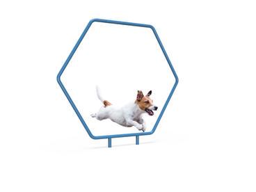 MREC Dog Single Hoop