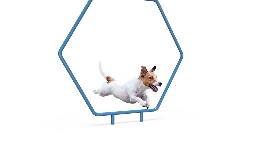 MREC Dog Single Hoop