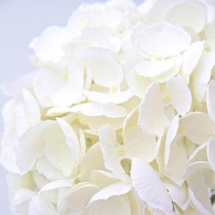 White Hydrangeas- Three Long Stem