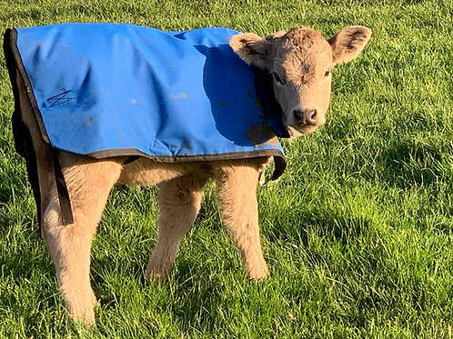 Dairy, Beef, Poddy Calves Canvas Calf Rug-single, twin pack, 3 x pack each size