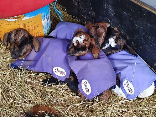 Allrounder Kid Goats Single Rugs Without Heat Pack