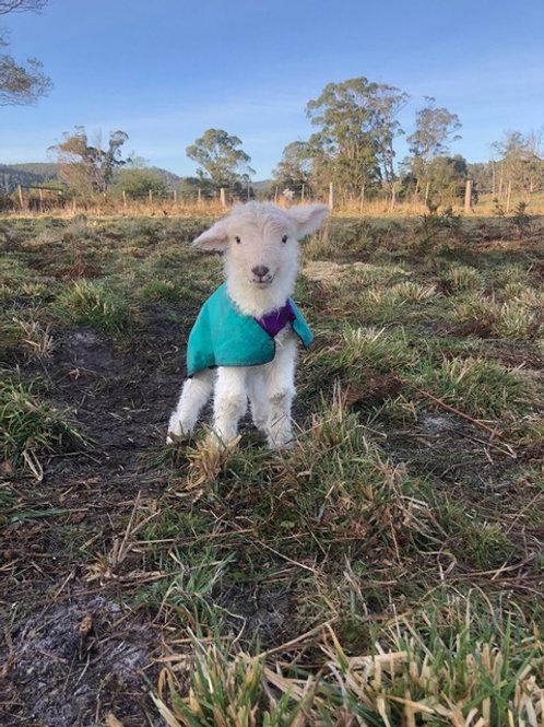 Lamb Allrounder Starter Pack Without Pockets