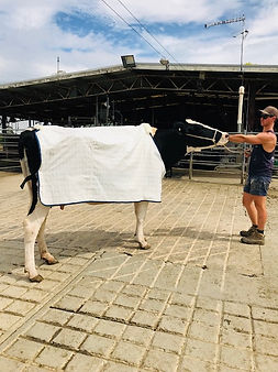 Cow Canvas Rug