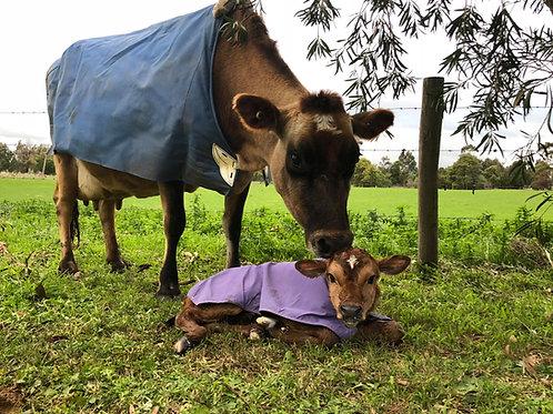 Dual Canvas Cow - Down Cow Rug