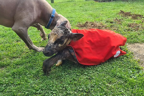 ICU Small Animal Rugs Premature Calf Rugs