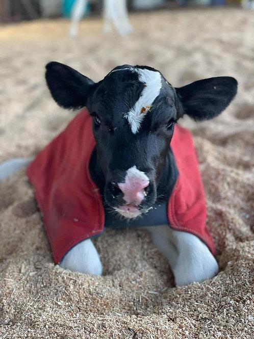 ICU Small Animal Rugs - Twin Premature Calf Rugs