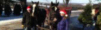Wagon ride at Christmas Tree farm