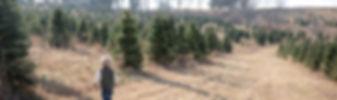 Christmas Tre FArm