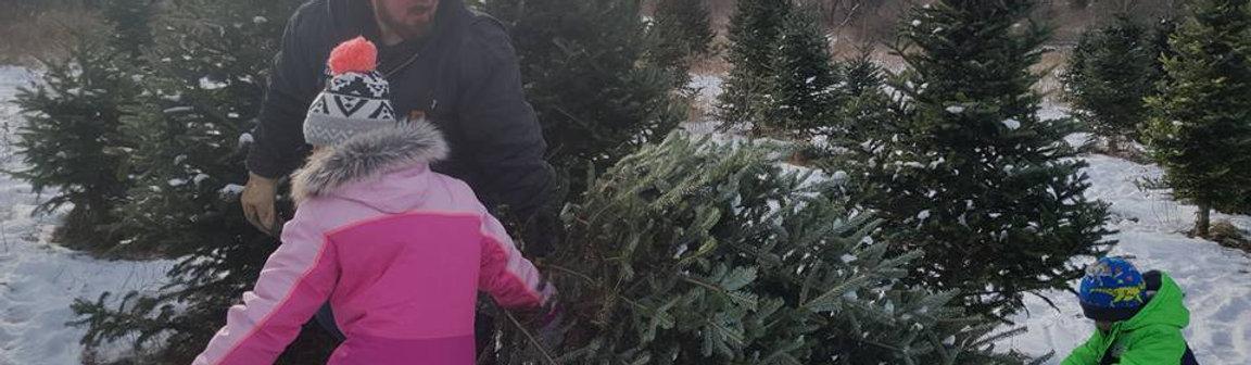 Choose & Cut Christmas Trees