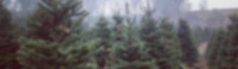 Christas Trees
