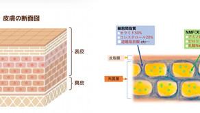 お肌の構造と特性...①