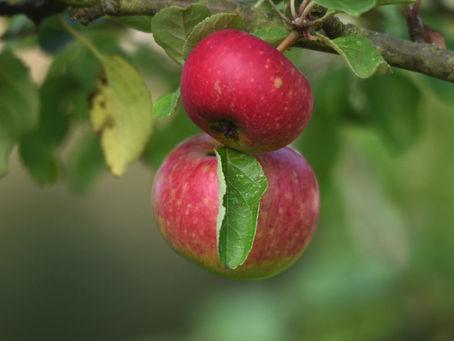 Det lilla äpplemusteriet