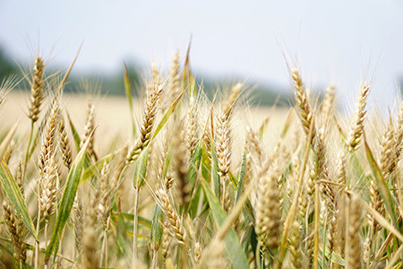 Preserving the Harvest: Identifying and Understanding the Factors That Influence Pledge Fulfillment