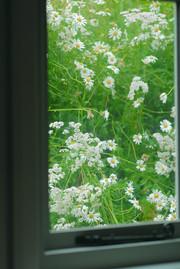 Window Howe of Torbeg Shepherds Hut.jpg