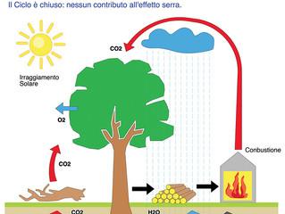 Legno e CO2