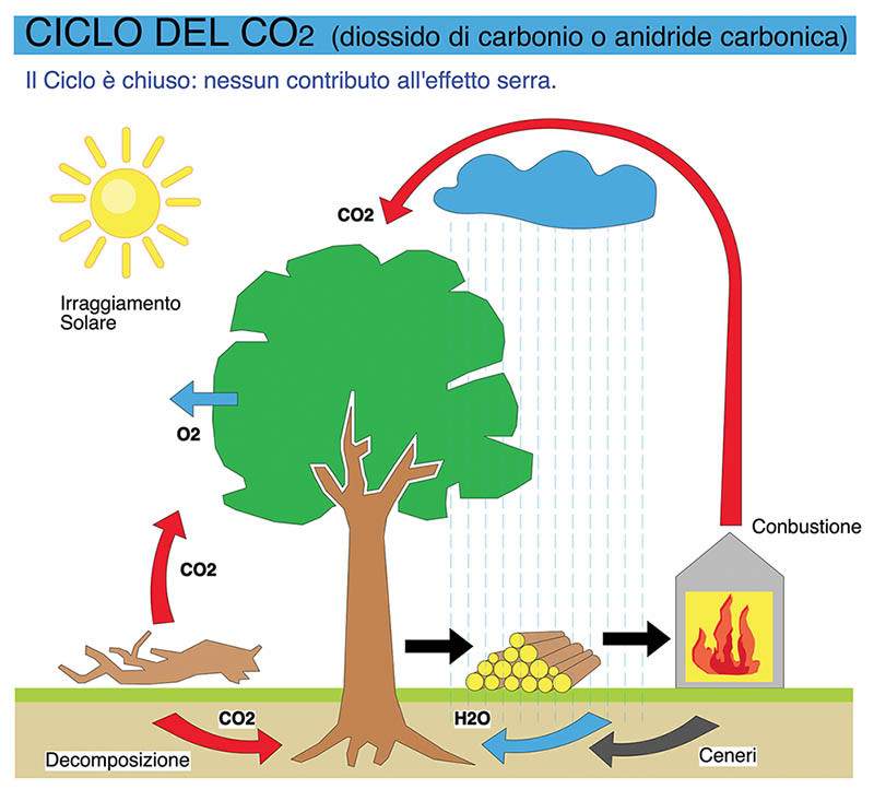 legno ciclo CO2