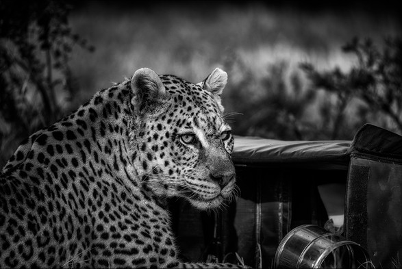 'The Day A Leopard Came To Tea' by Alan Hillen