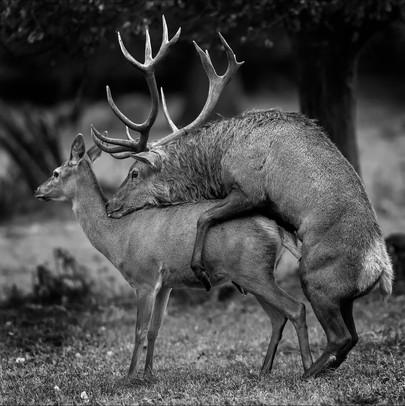 'Oh Deer Me' by Alan Hillen
