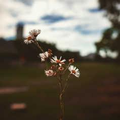 flowernchi.jpeg