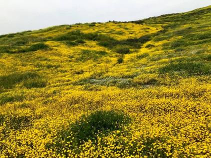 Menifee Hills