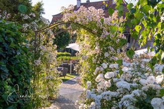 280_Gartenfenster_Juni_2020_850_2976.jpg