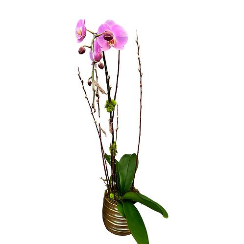 Single Stem Orchid