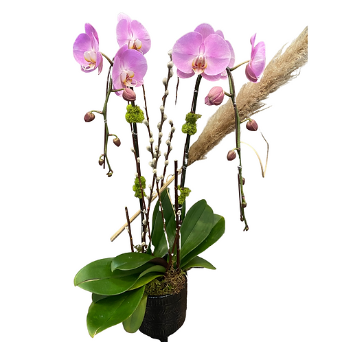 2 Stem Orchids